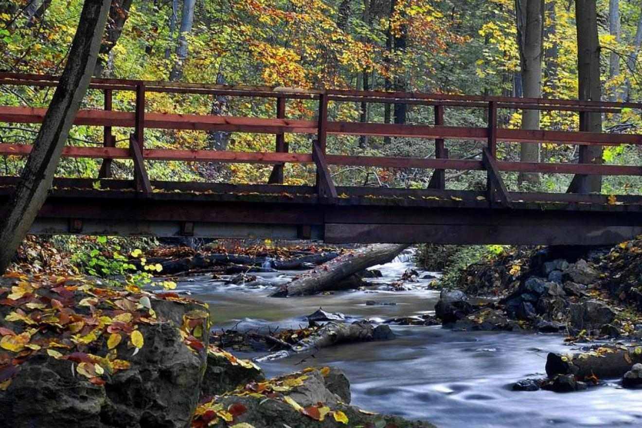 bridge-and-forests